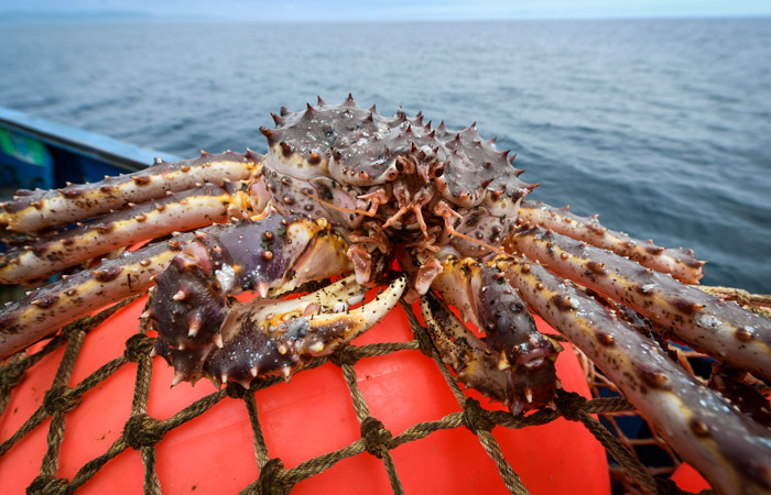 Pincers reach for crab dollars