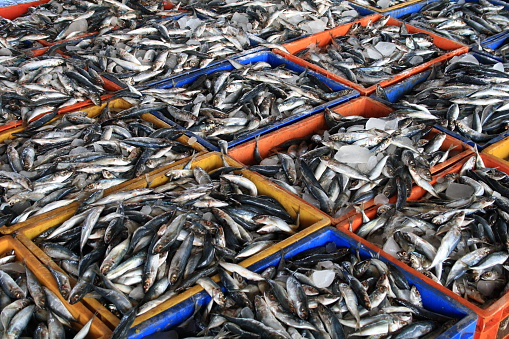 Rosrybolovstvo: negotiations on the export of fish to China are difficult