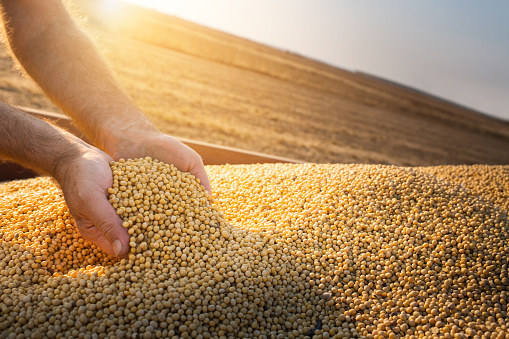 The expert told how much will rise in price for soybeans and rapeseed