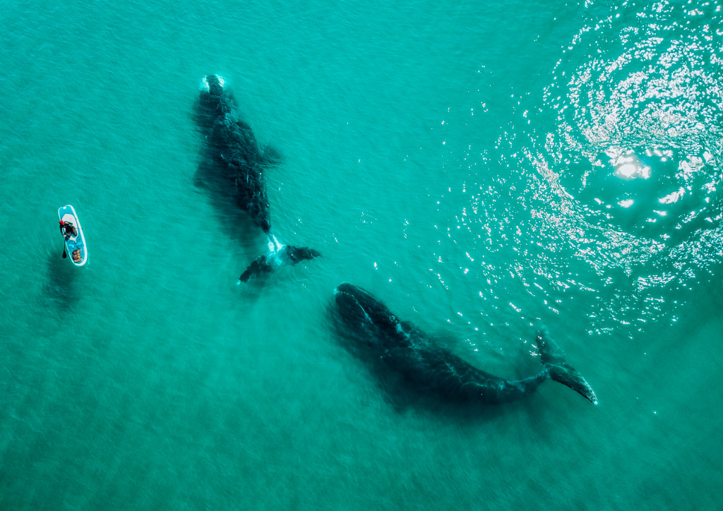 whales-1.jpg