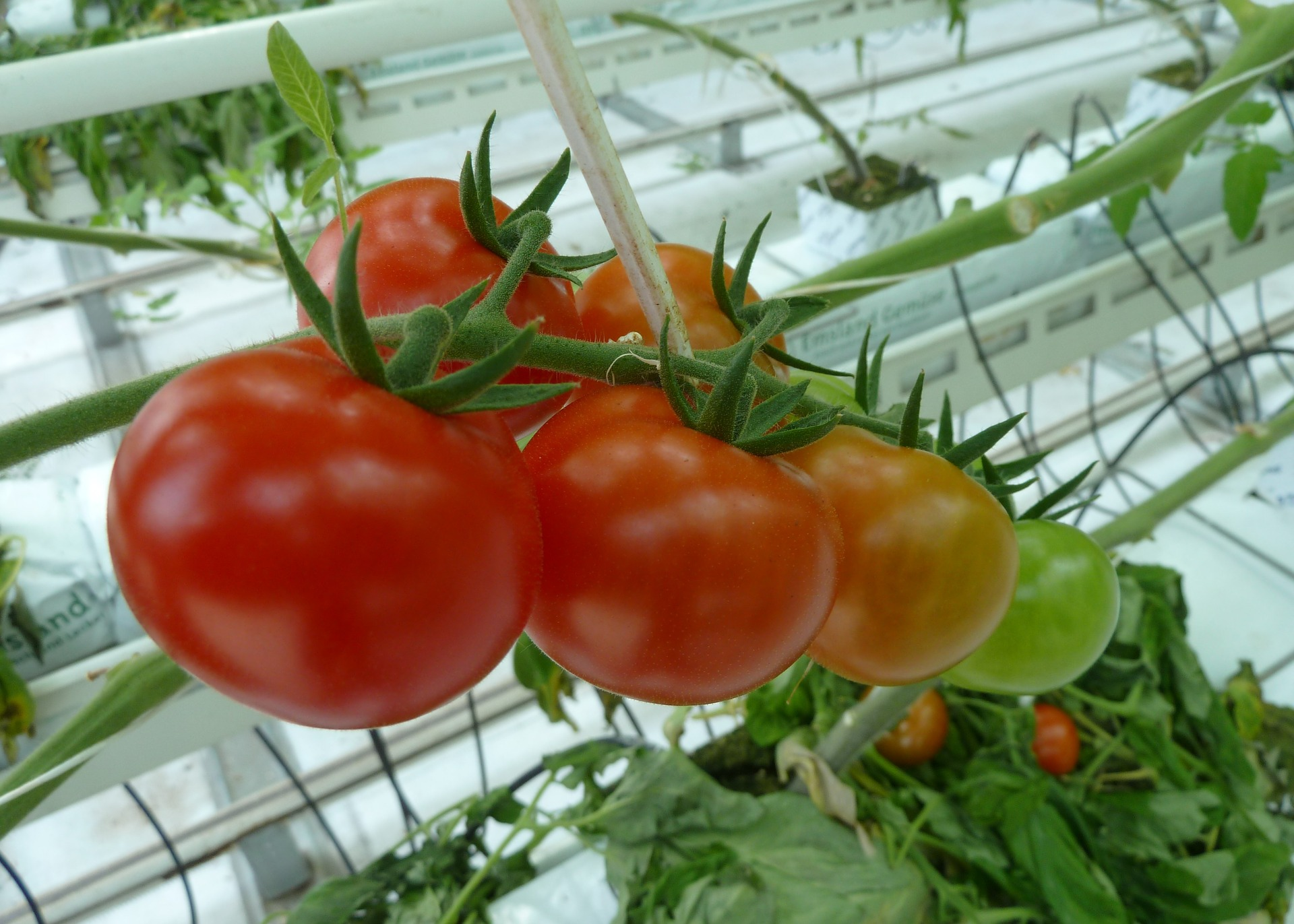 A new greenhouse complex will appear on the territory of the Khabarovsk ASEZ