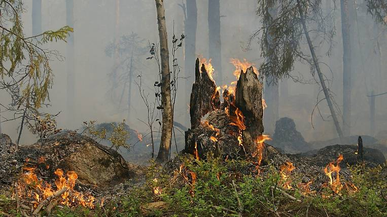 State Duma plans to raise fines for forest fires
