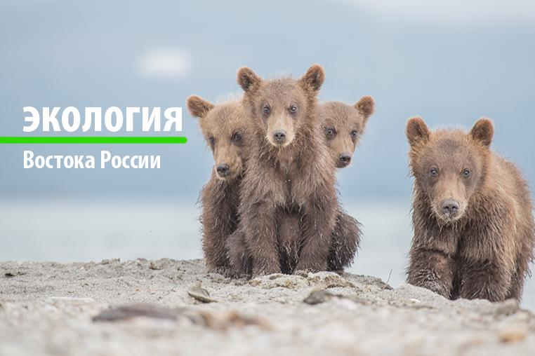 Ecology of the East of Russia