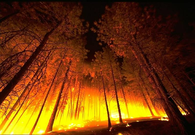 Forest fires: stupidity of people and imperfection of laws