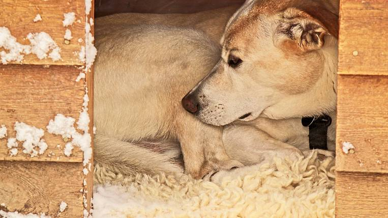 More than two thousand dogs were caught in the capital of Buryatia