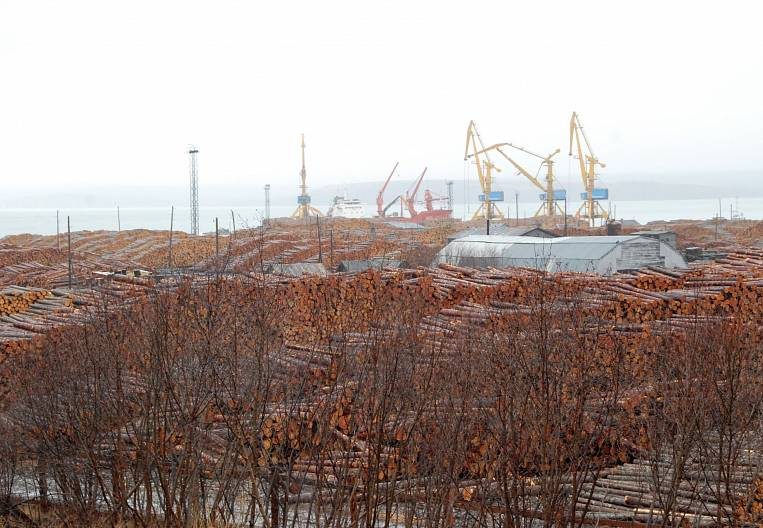 EastRussia Bulletin: Friday exclusive - forestry