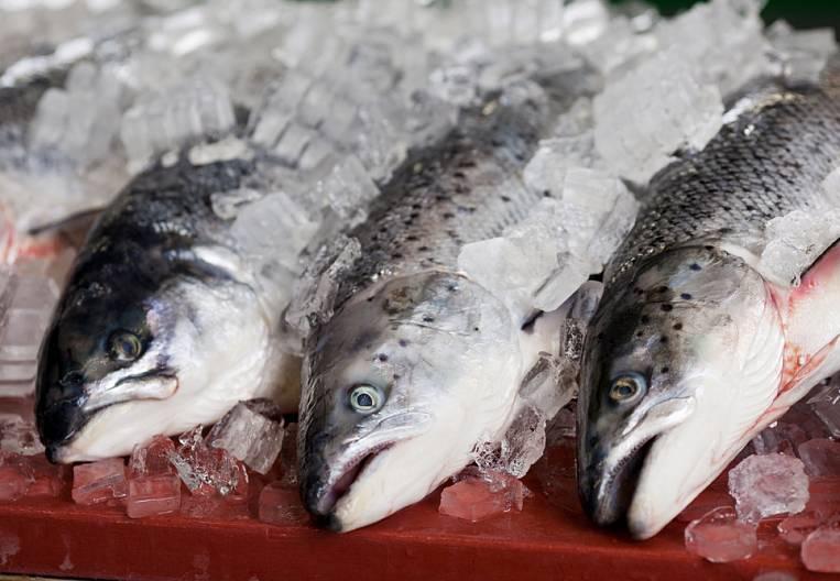 Fish temptation