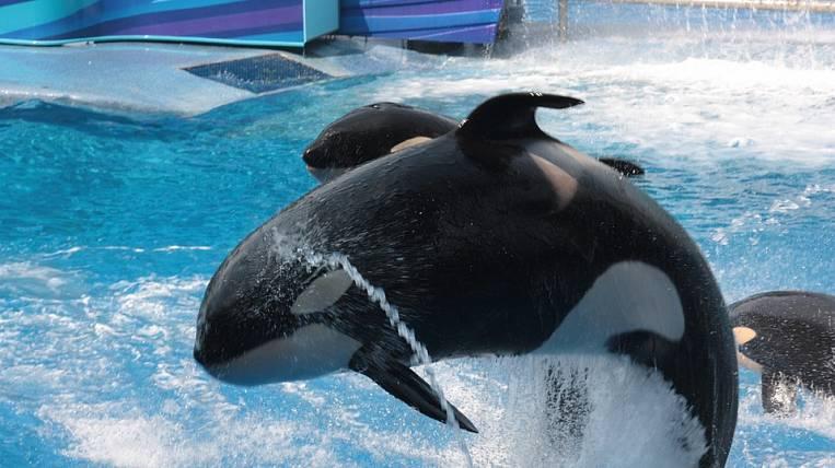 Следствие подозревает омских строителей в смерти дельфинов вПриморье