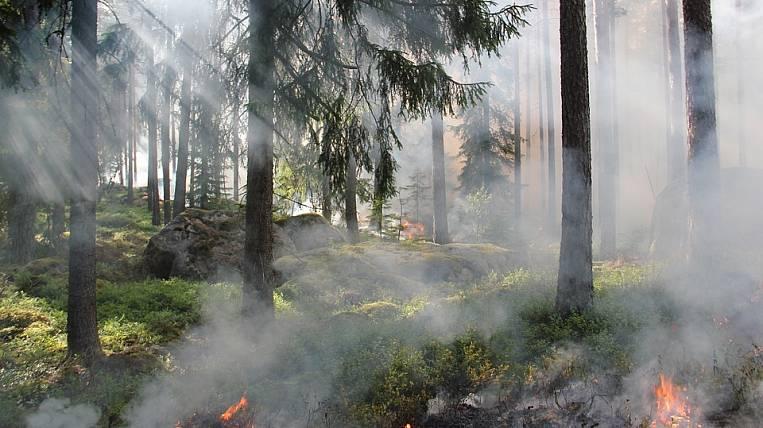 ВХабаровском крае мужчина нарубил леса на6 млн