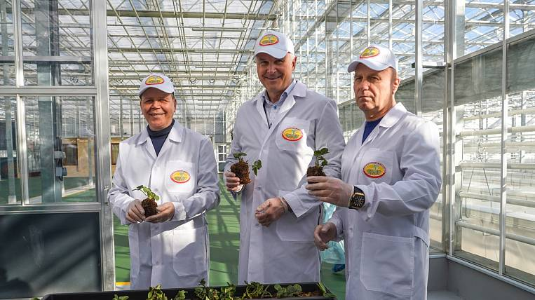 Strawberry production was first launched in Kolyma