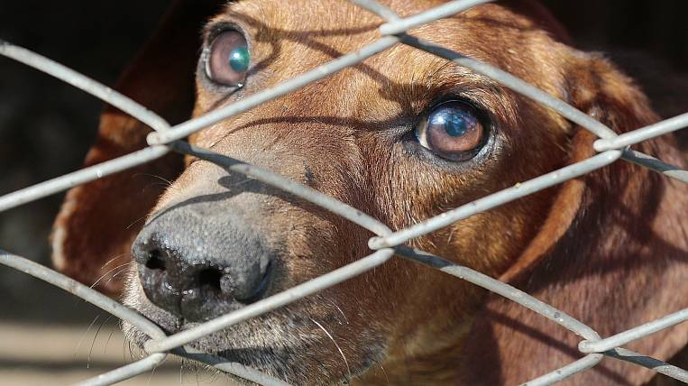 More than 33 million rubles will be spent on catching stray dogs in Buryatia