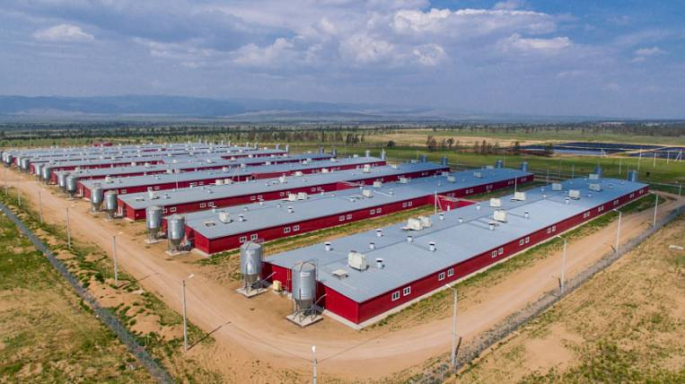 """The pig farm will be built by a new resident of the ASEZ """"Buryatia"""""""