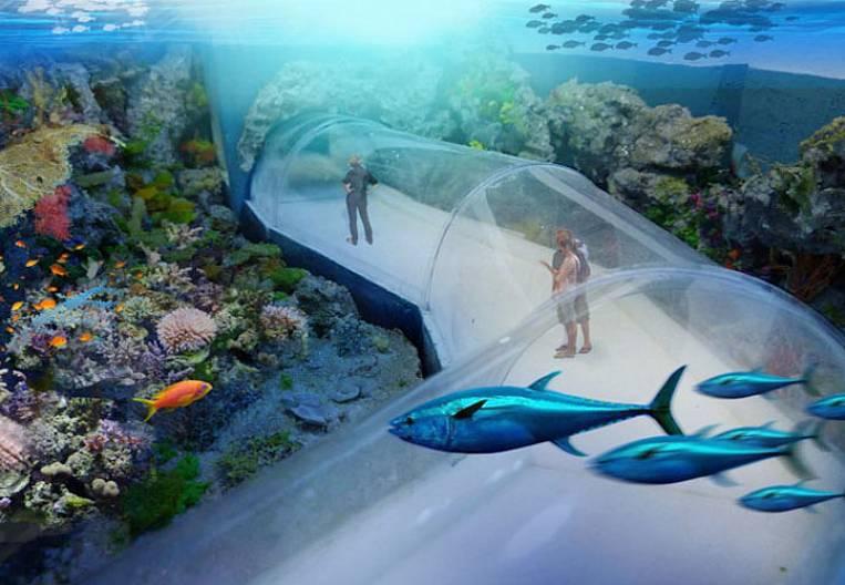 Where do the beluga live?