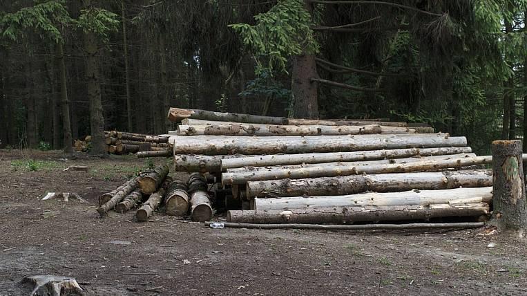Трутнев предложил с помощью спутника управлять лесами на ДВ