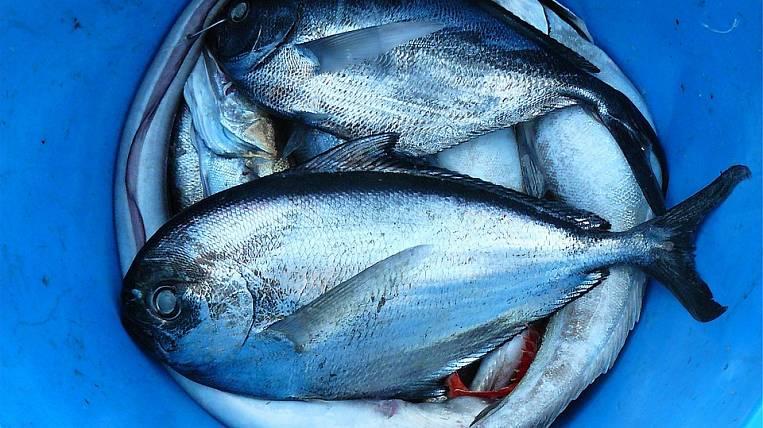 Боссу рыбокомбината наШикотане угрожает 7,5 лет